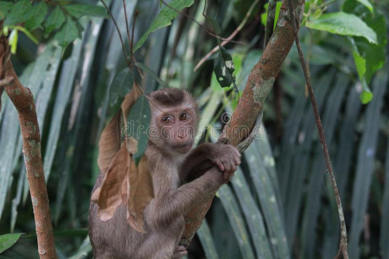 A cute monkey holding on the tree. In the forest stock image