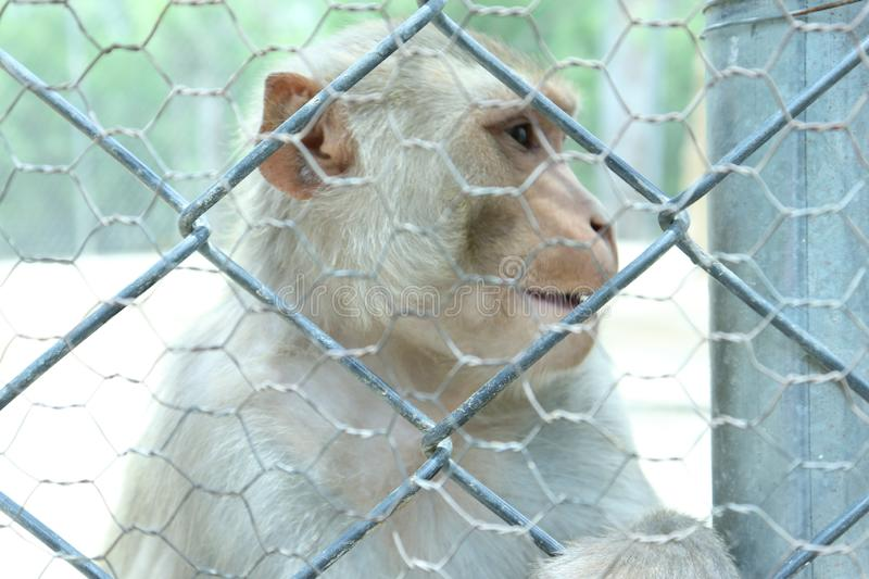 Moneky is very funny animal. stock images