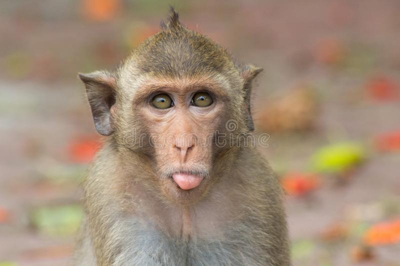 Cute monkey. A cute monkey in natural forest stock image