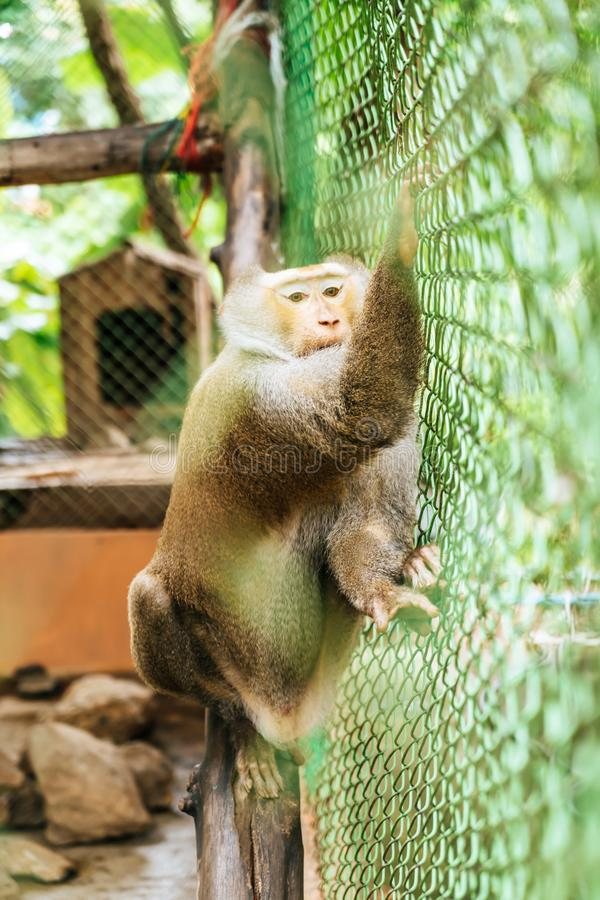 Cute monkey sitting in cage. On farm stock photos