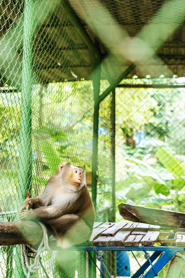 Cute monkey sitting in cage. On farm royalty free stock photo