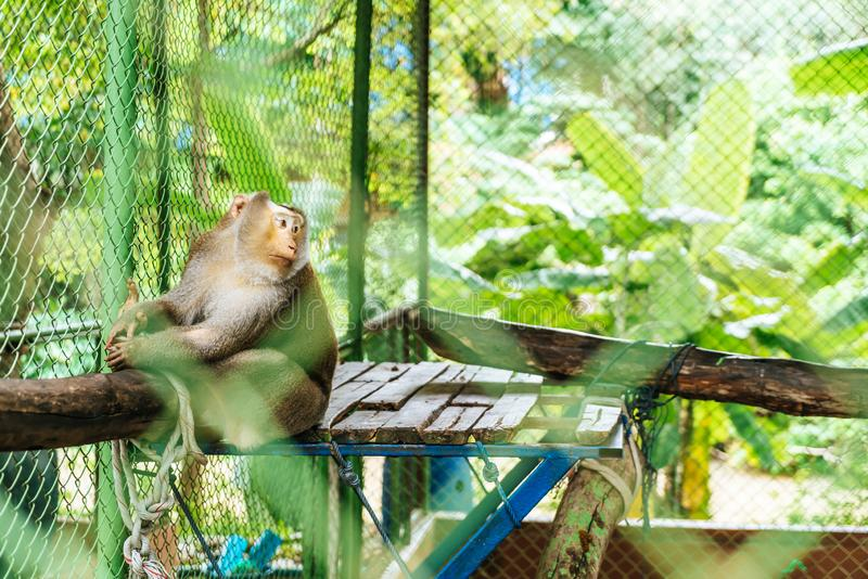 Cute monkey sitting in cage. On farm royalty free stock image