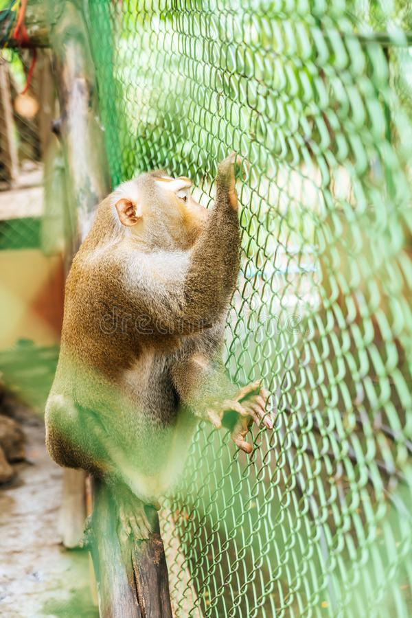 Cute monkey sitting in cage. On farm stock images