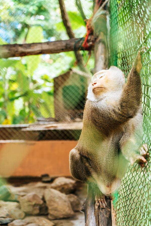 Cute monkey sitting in cage. On farm royalty free stock photos