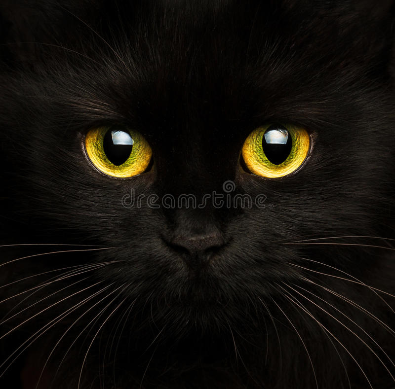 Cute muzzle of a black cat close up. Cute muzzle of a black cat closeup