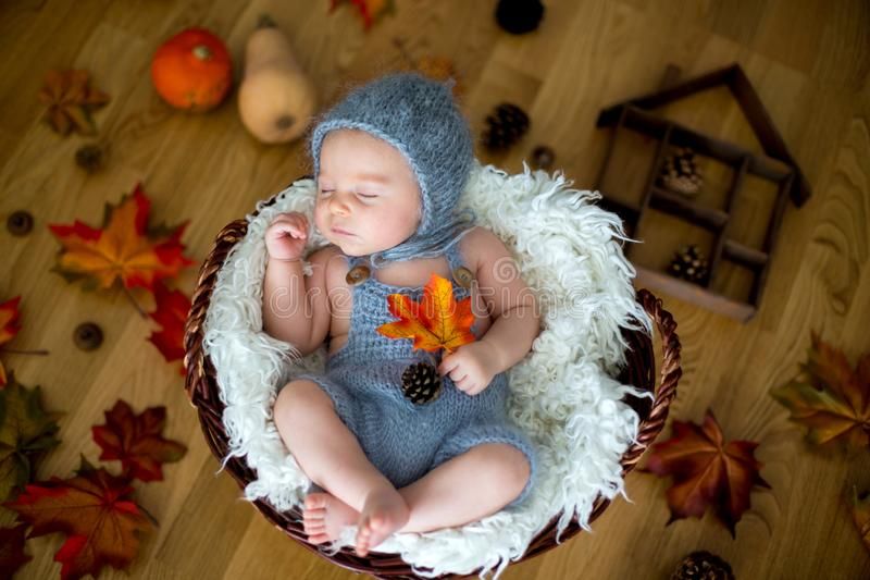 Cute newborn baby boy, sleeping with autumn leaves in a basket a. T home, autumn ornaments around him stock photography