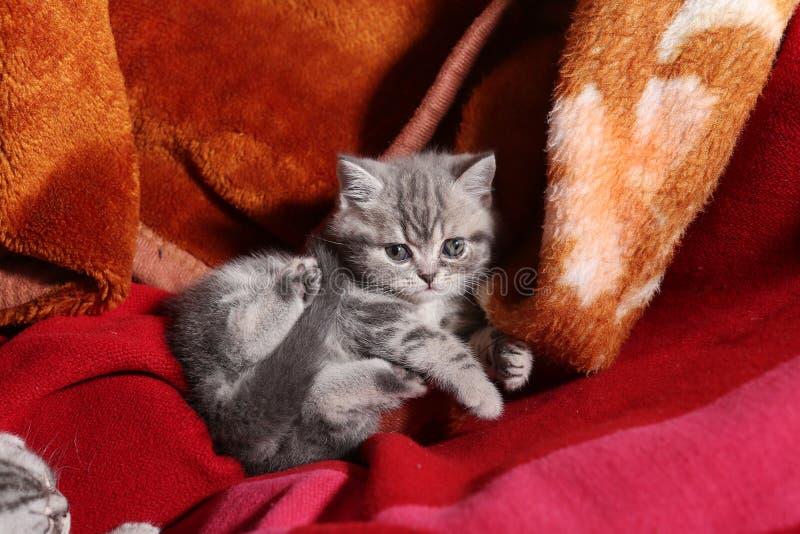 Cute newly born kitten royalty free stock photos