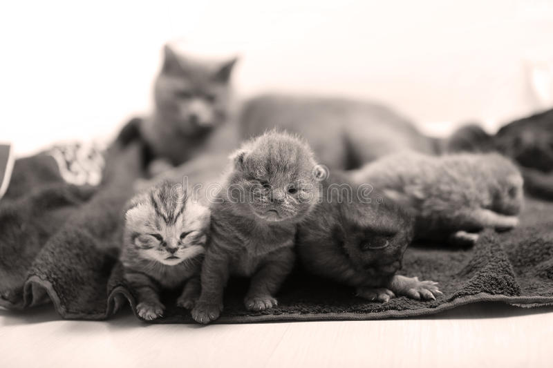 Cute newly born kittens. Sitting near their mother stock photography
