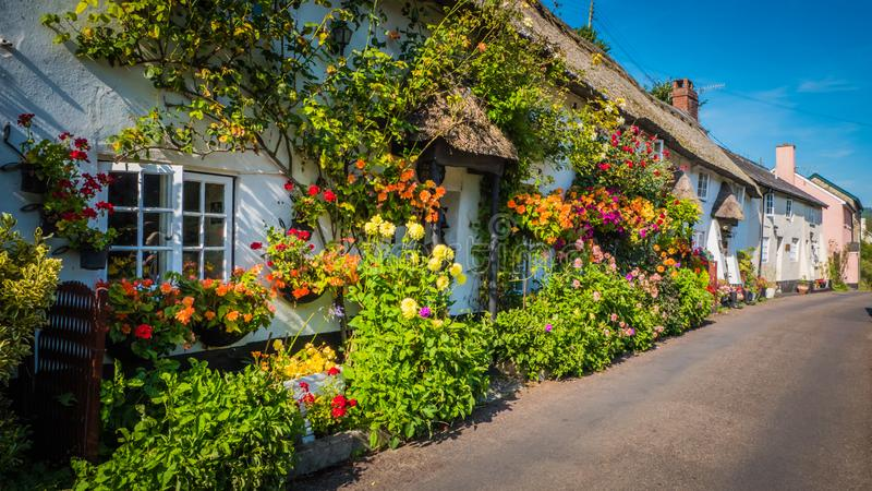 Old British cottages with flowers near Lyme Regis, Dorset, UK. Cute old English house with a thatched roof and flowers in a green hilly landscape on a summer royalty free stock photo