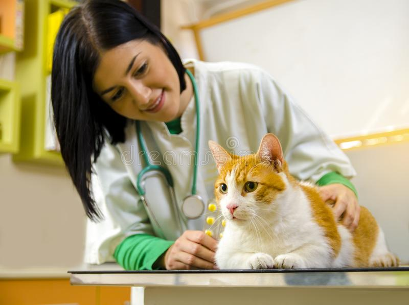 Cute orange cat having vet checkup and treatment. Vet in background holding medicine royalty free stock image