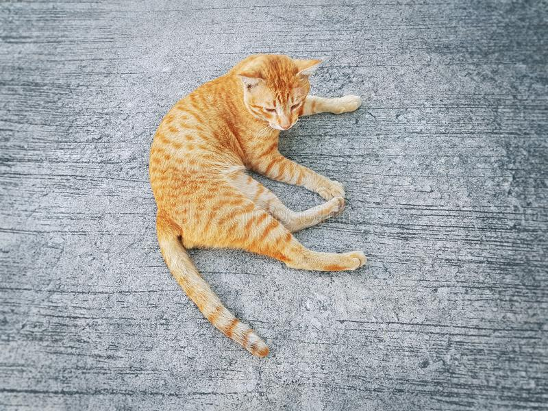 A Cute Orange Domestic Ginger Cat Lying on the Floor royalty free stock photo