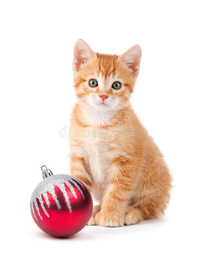Cute orange kitten with large paws sitting next to a Christmas O. Rnament islolated on a white background royalty free stock images