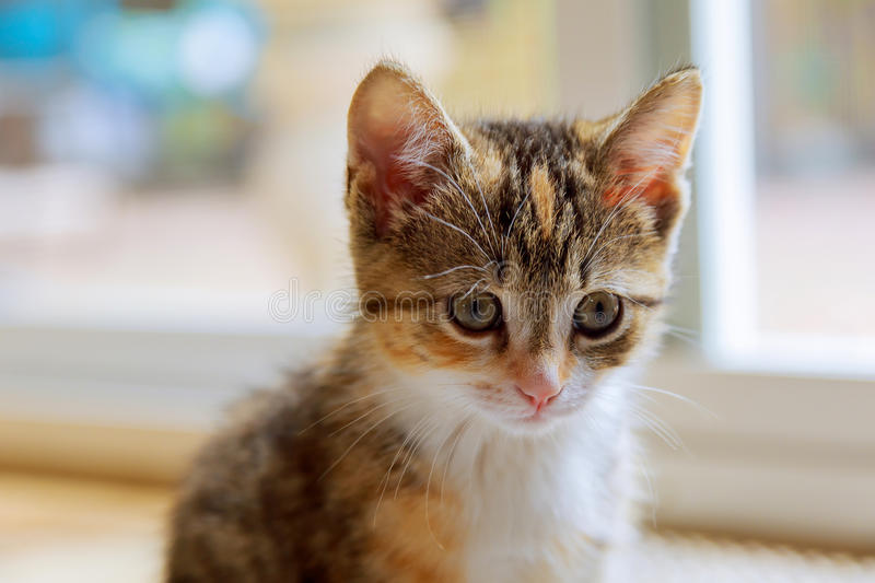 Cute orange kitten photographed with a specialty lens to get soft dreamy effect. stock images