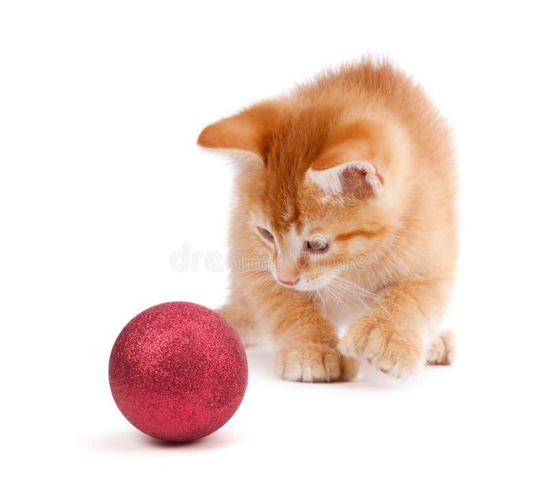 Cute Orange Kittens Playing