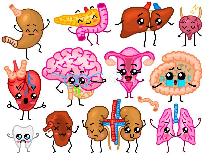 Cute organs. Happy human, Set of smiling characters. Vector pins, cartoon kawaii icons. Healthy heart, stomach, liver. Bladder, uterus organ, lungs kidneys vector illustration