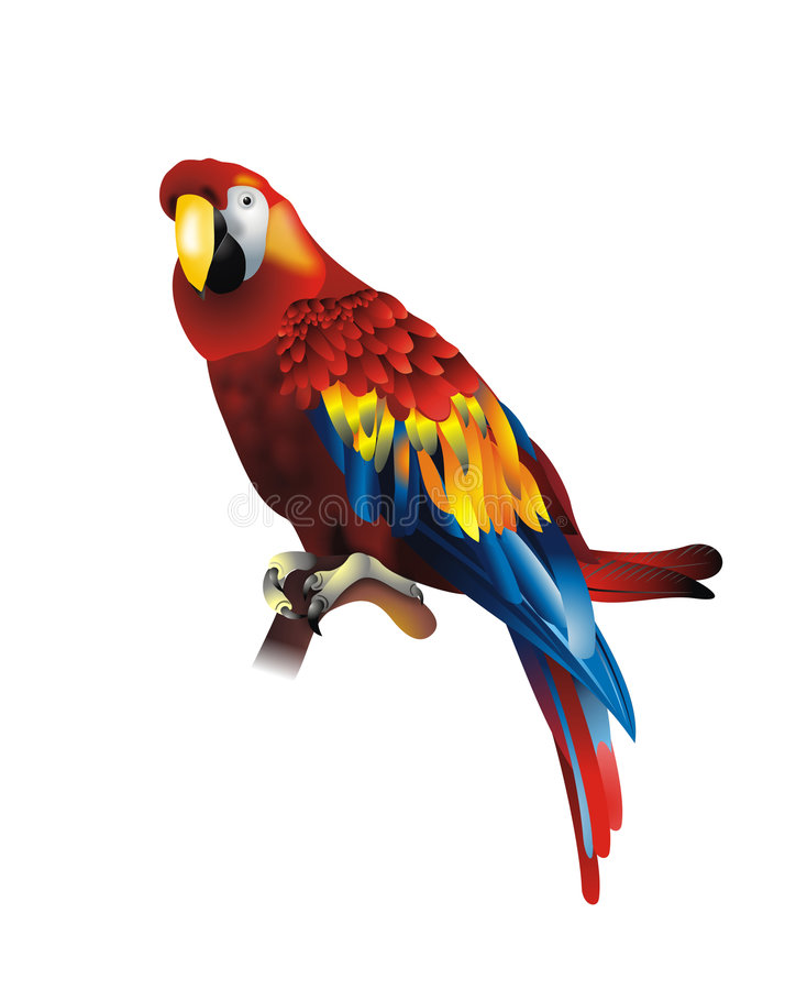 Cute parrot. Cute red parrot illustration isolated on white stock illustration