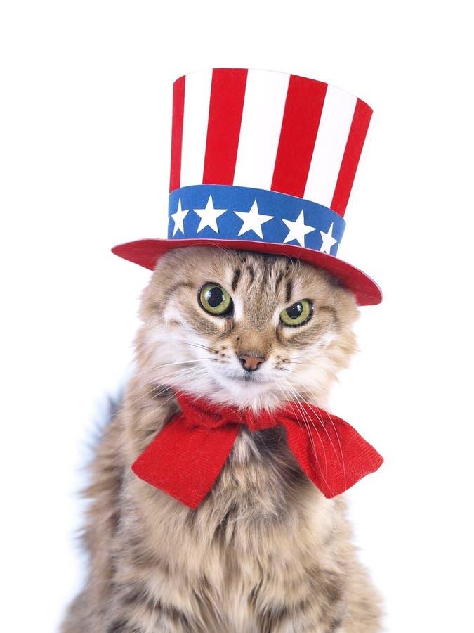 Cute patriotic cat royalty free stock images