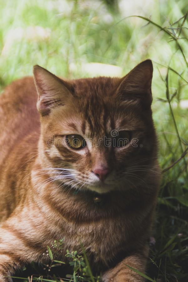 Ginger cat relaxing royalty free stock photography