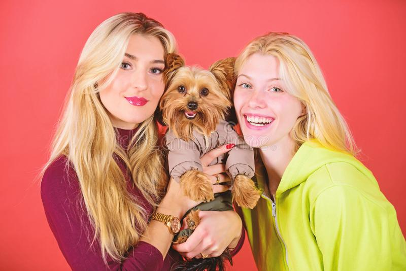 Cute pet dog. Yorkshire Terrier breed loves socialization. Blonde girls adore little cute dog. Women hug yorkshire. Terrier. Yorkshire terrier is very stock photography