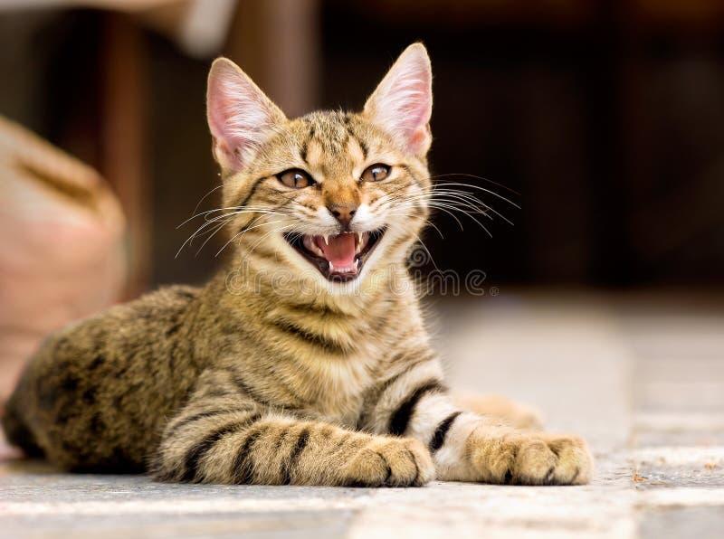Cute pet kitten royalty free stock photos