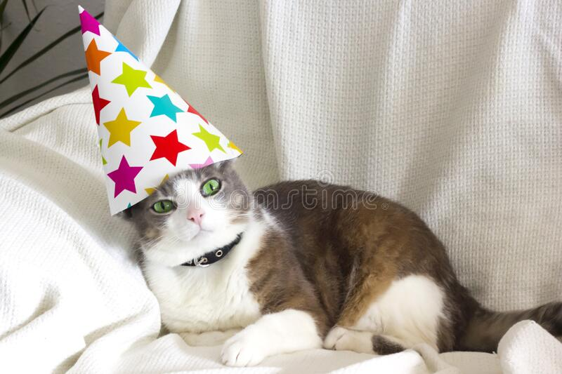 2,191 Cat Birthday Party Photos - Free & Royalty-Free Stock Photos from  Dreamstime