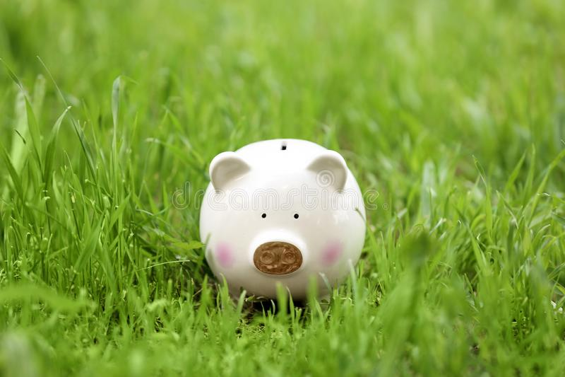 Cute piggy bank in green grass. Outdoors royalty free stock photos