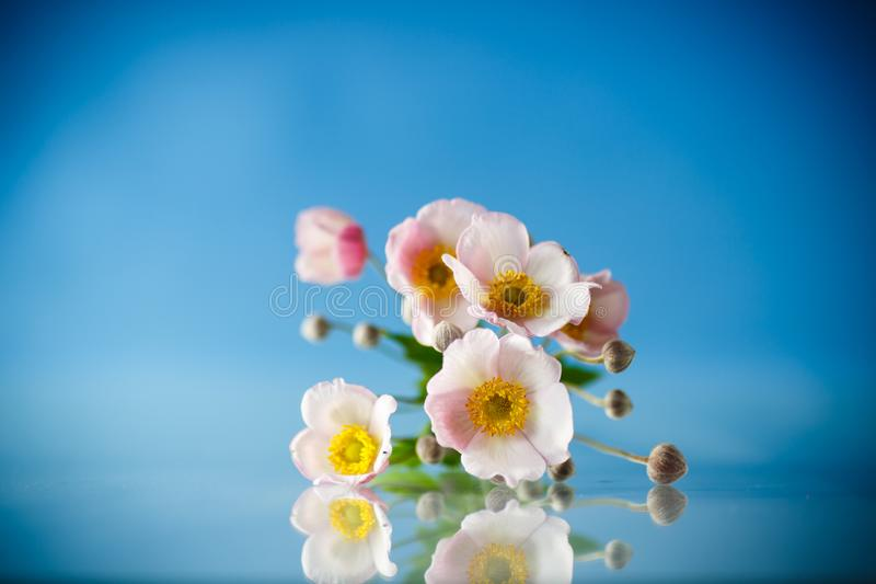 Cute pink flowers on a blue background stock images