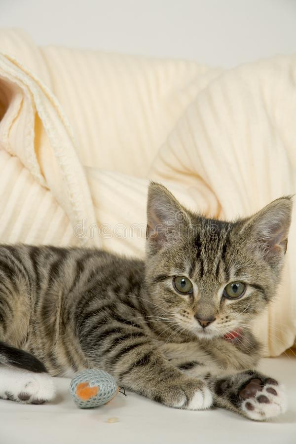 Kitten. A cute playful kitten resting by her bed stock image