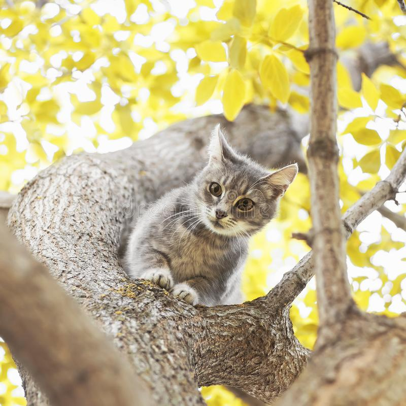 Cute playful tabby kitten looking down from a tree trunk on a Su royalty free stock images
