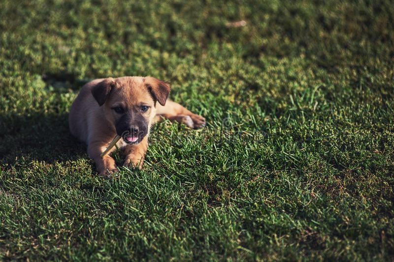 Cute playing puppy dog. On a green grass stock image