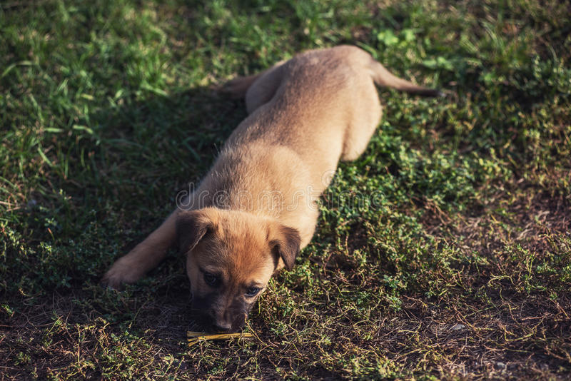 Cute playing puppy dog. On a green grass royalty free stock photography
