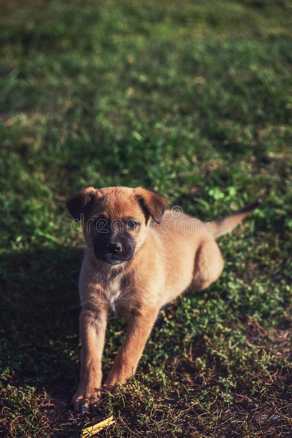 Cute playing puppy dog. On a green grass stock images