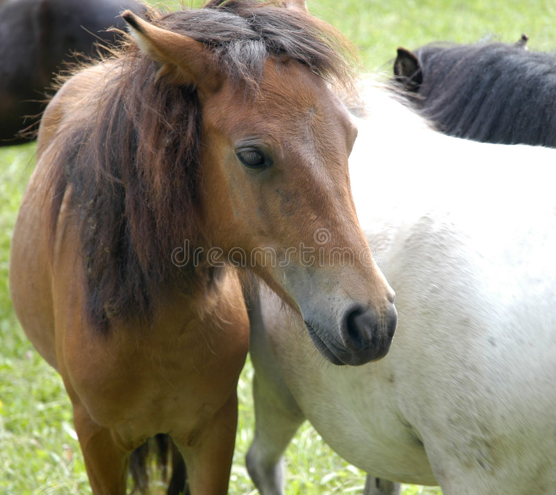 Download Cute pony stock photo. Image of black, horse, green, grazing - 189128