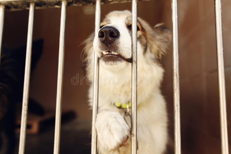 Cute positive dog ponting paw and nose in shelter cage, happy an royalty free stock photography