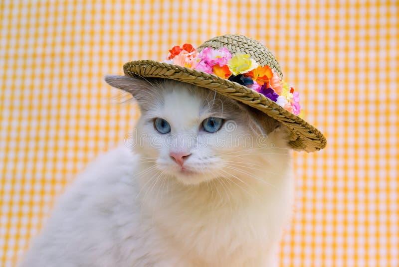 Cute pretty Ragdoll cat with a hat stock photos