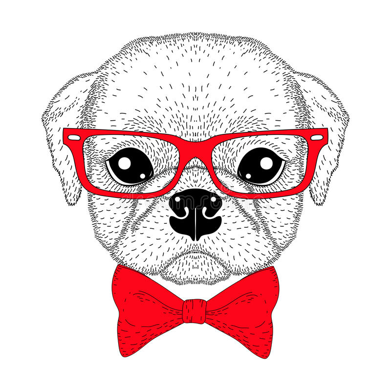 Cute pug boy portrait with bow tie, hipster glasses. Hand drawn stock illustration