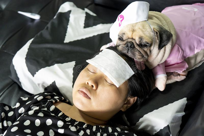 Cute pug dog with nurse costume take care of the owner, who is sleeping sick with a cold compress on the forehead. Love and. Healthcare concept, pets, animal stock images
