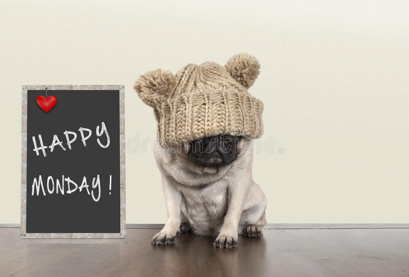 Cute pug puppy dog with bad monday morning mood, sitting next to blackboard sign with text happy monday, copy space royalty free stock photos