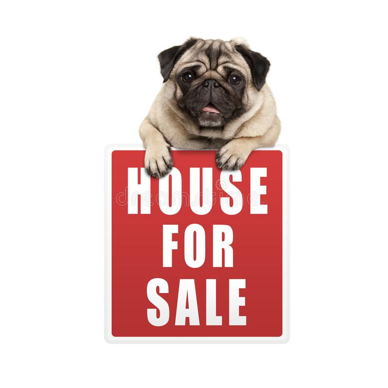 Cute pug puppy dog hanging with paws on red house for sale sign. Isolated on white background stock photos