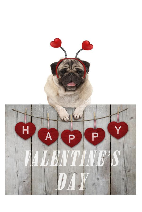 Cute pug puppy dog leaning on wooden fence of used scaffolding wood with red hearts and text happy valentines day stock photo