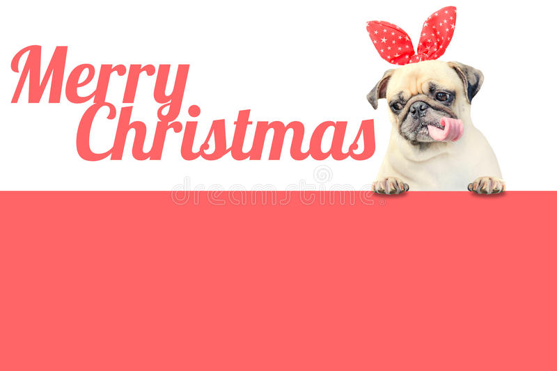 Cute Pug puppy dog with red christmas hat ears looking at easy text to remove with word Merry Christmas above pink banner. royalty free stock images