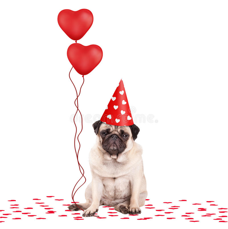 Cute pug puppy dog sitting down on confetti, wearing party hat and holding red heart shaped balloons, isolated on white bac royalty free stock photography