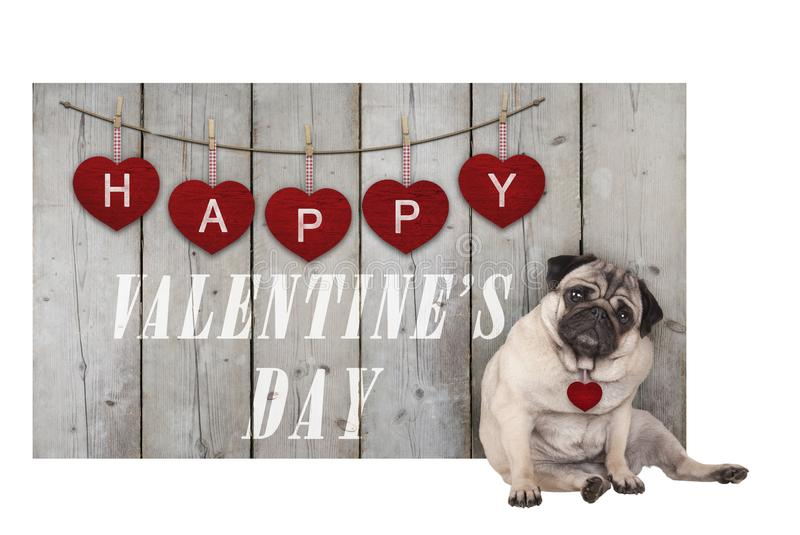 Cute pug puppy dog sitting down next to wooden fence of used scaffolding wood with red hearts and text happy valentines da stock photography