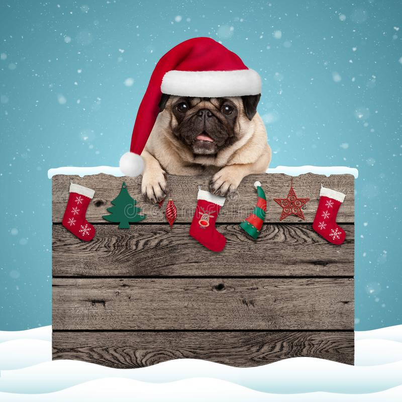 Cute pug puppy dog wearing santa hat hanging with paws on weathered wooden sign with Christmas decoration. On blue snowy background background stock images