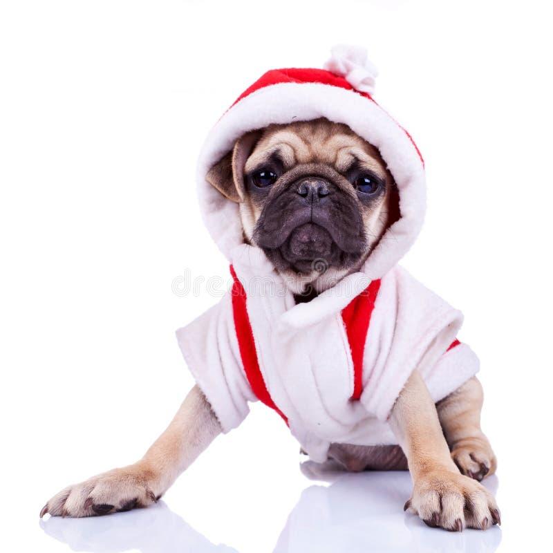 Cute pug puppy dressed as santa stock photo