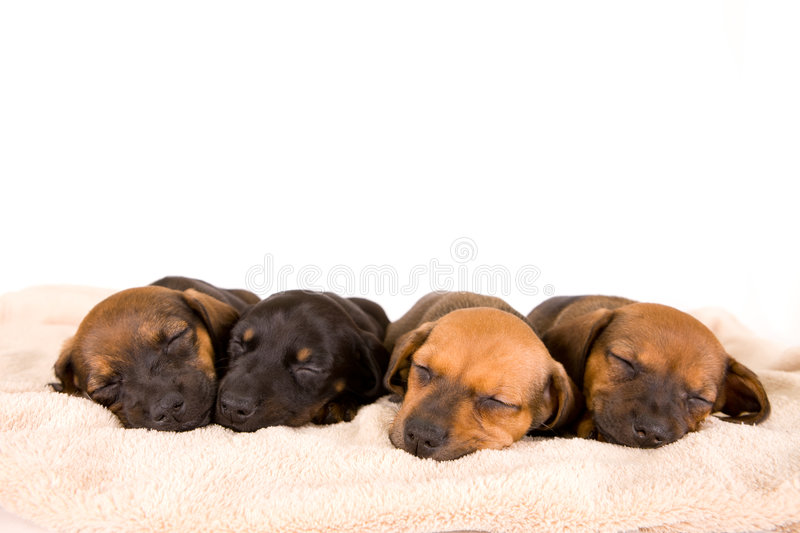 Cute puppies stock photos