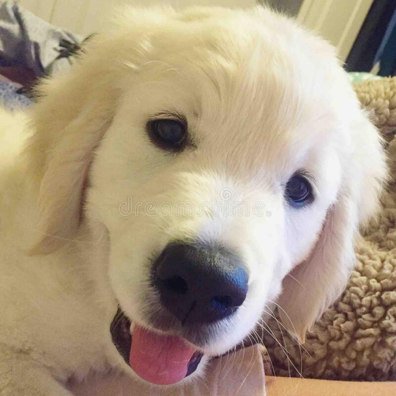 Cute Puppies @ January 09, 2016 at 09:58PM stock photos