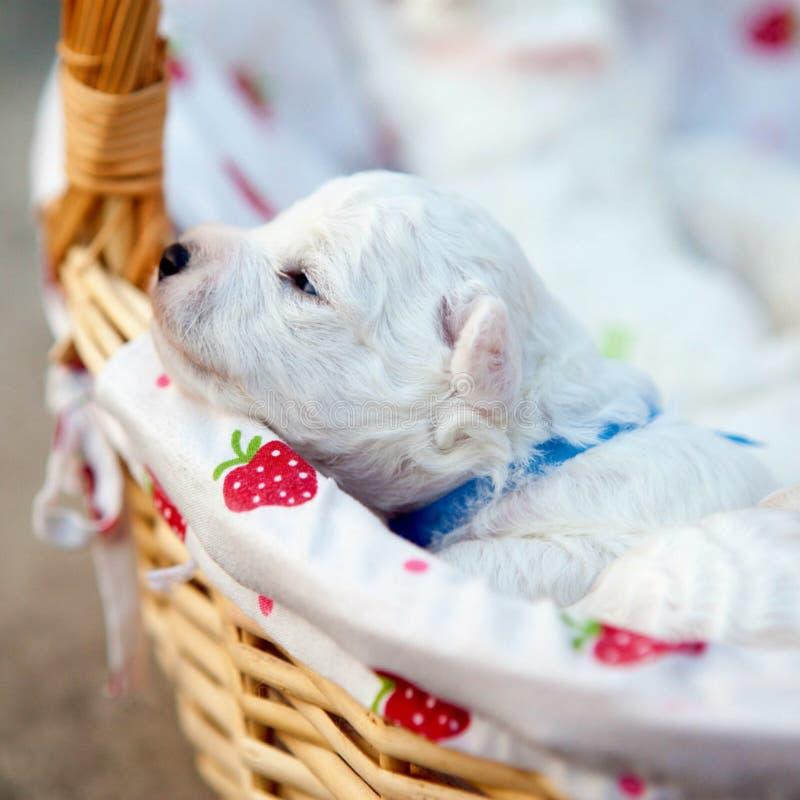 Cute Puppies @ January 26, 2016 at 12:59PM stock photos