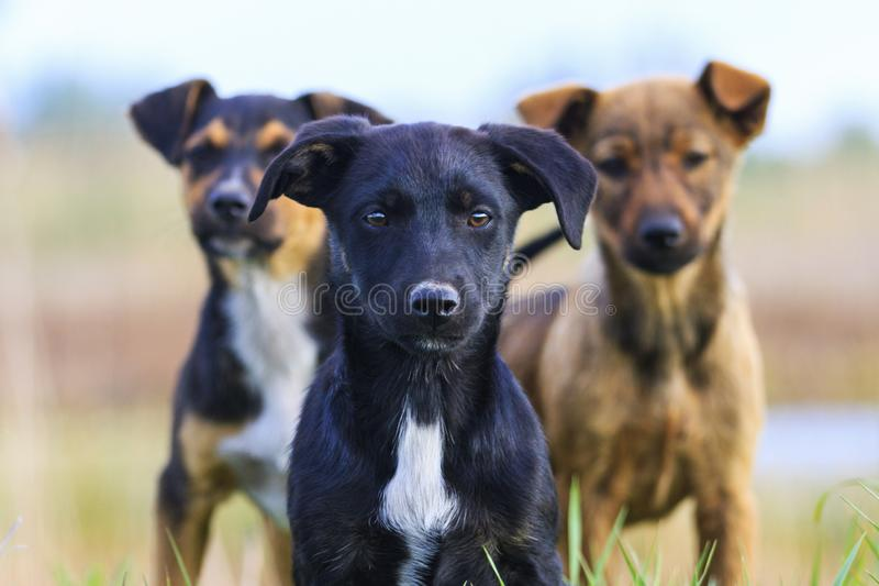 Cute puppies are looking at the camera. Symbol of the year 2018, man`s best friend stock photography
