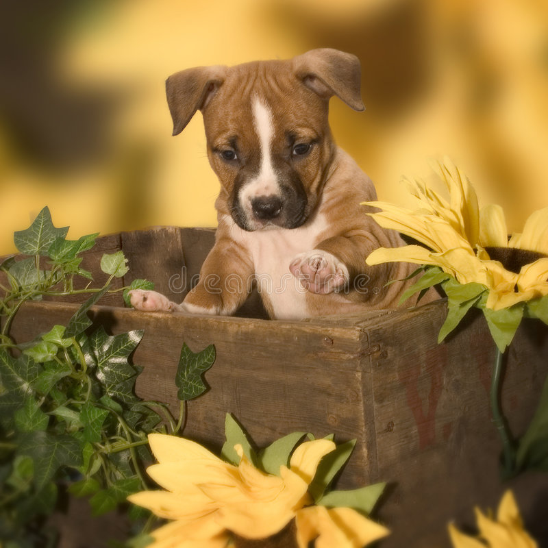 Cute puppy. Puppy in a box stock images